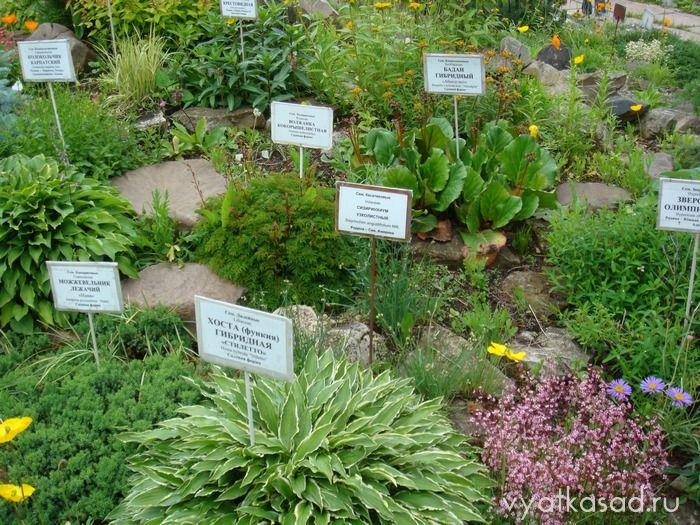 Магазин ботанический сад Киров