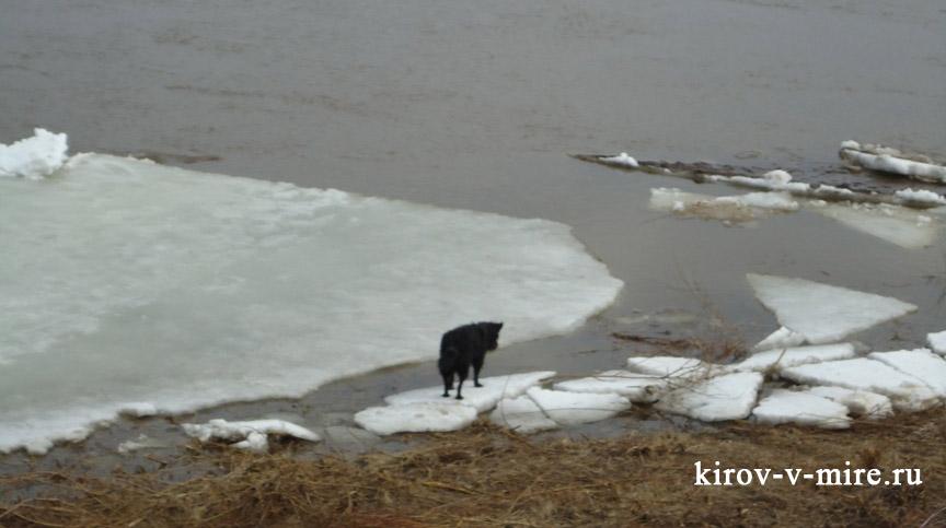 Пес на льдине