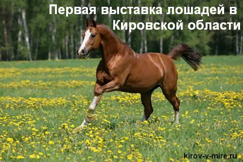 Первая выставка лошадей в Кировской области