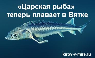 «Царская рыба» теперь плавает в Вятке