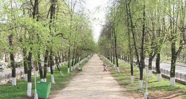 Аллея на Октябрьском проспекте
