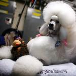 Любителей собак будут ждать в Заречном парке.