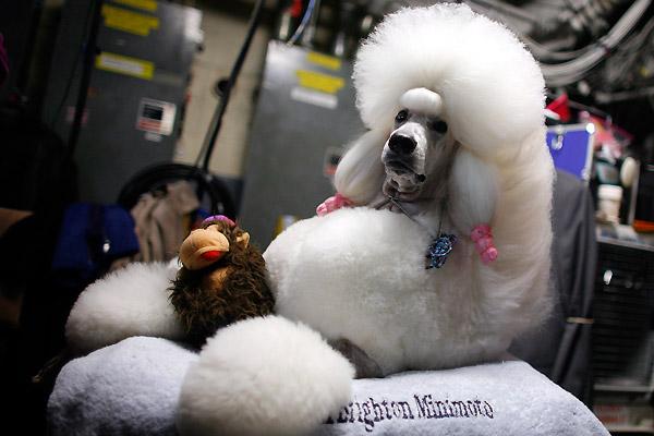 Выставка собак в Заречном парке