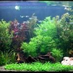 Создан аквариум, не нуждающийся в замене воды
