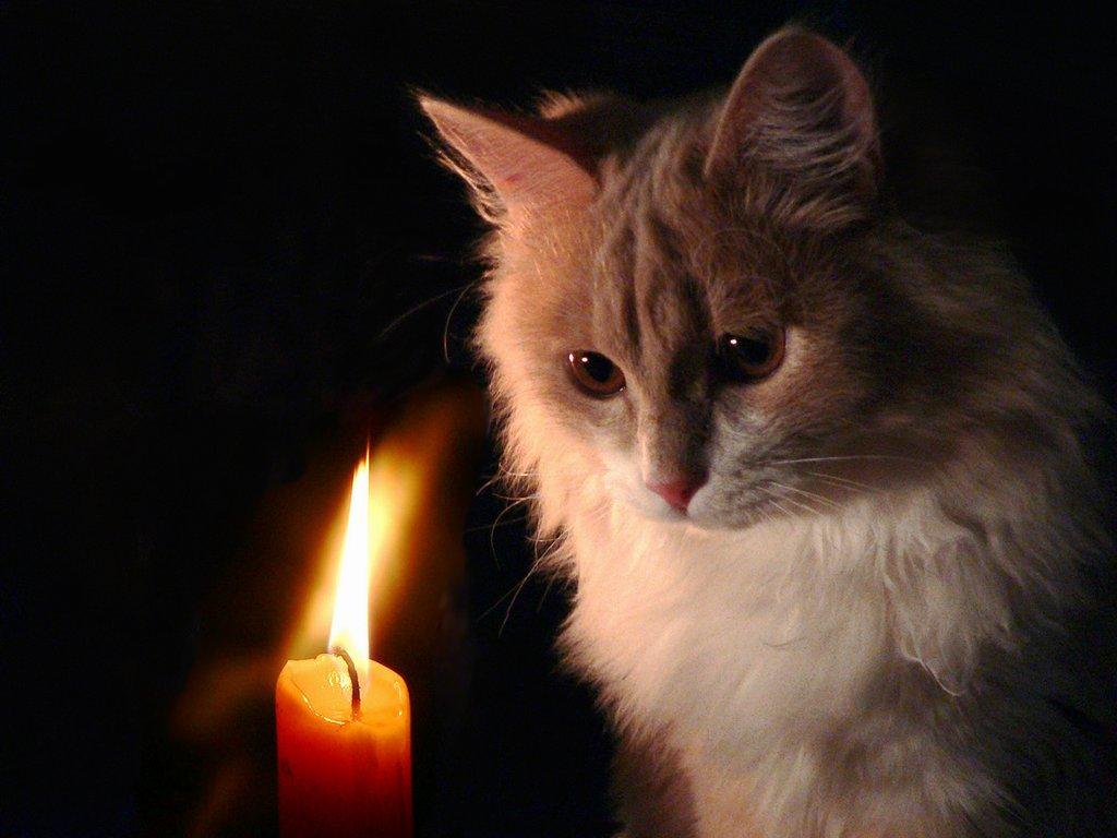 квартиру Перми, из за меня погиб кот турагентства Владивостоке