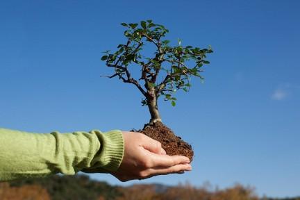 новые деревья в кирове