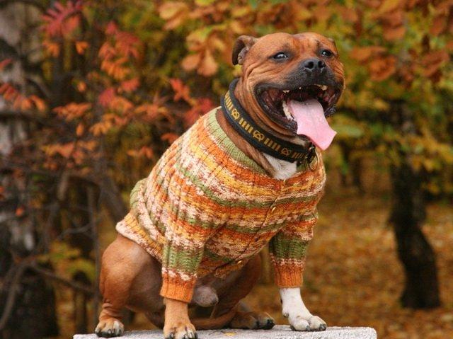 для чего собакам одежда
