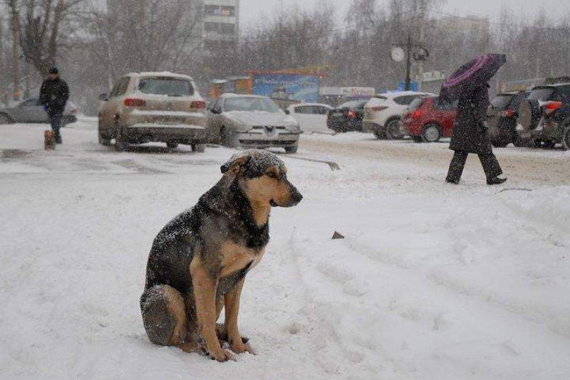 Жители Кирова недовольны отловом бездомных собак