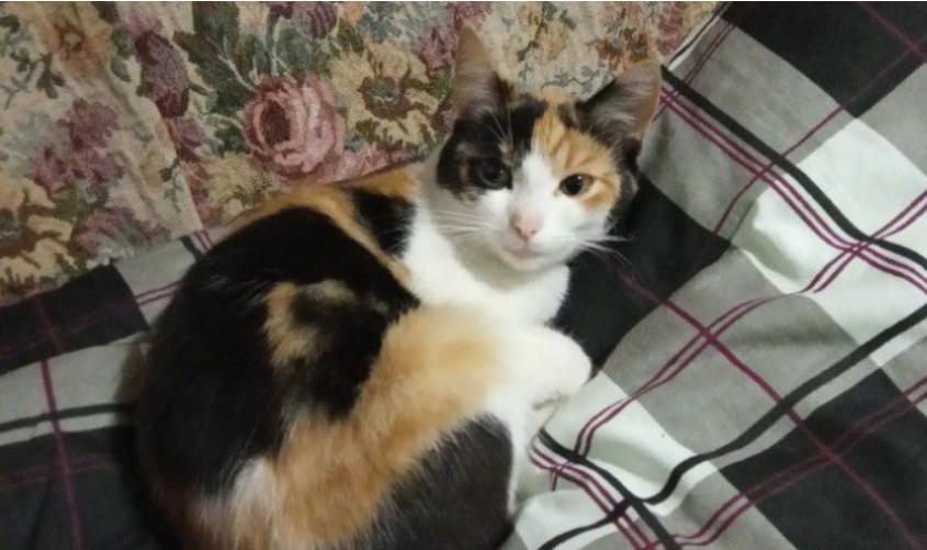 Житель Кирова хочет продать кошку за один миллион рублей