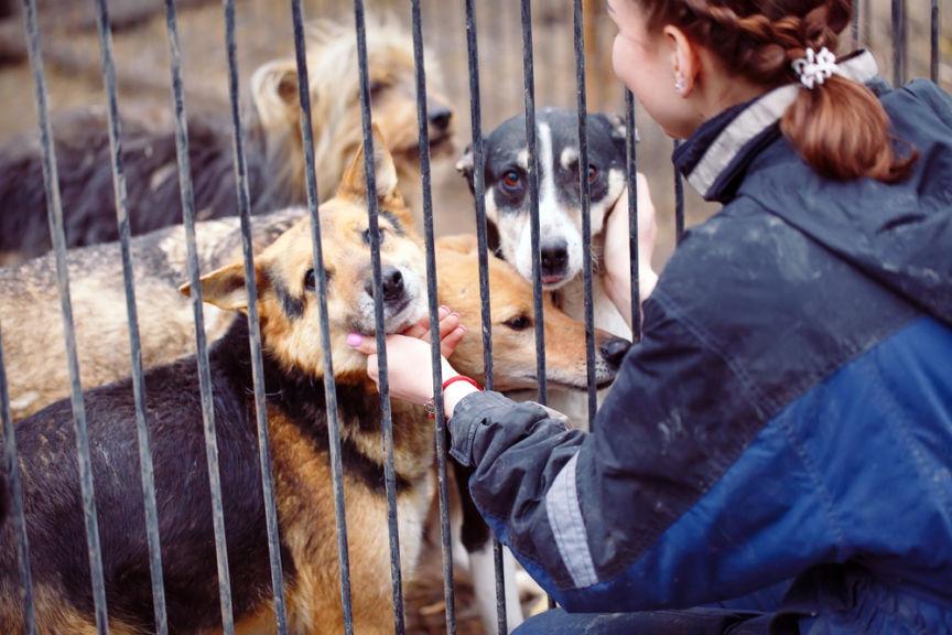 В Кирове начался сбор помощи для приютских животных