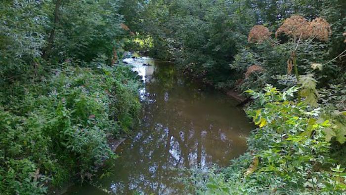 Областной бюджет выделил средства на расчистку двух Кировских рек