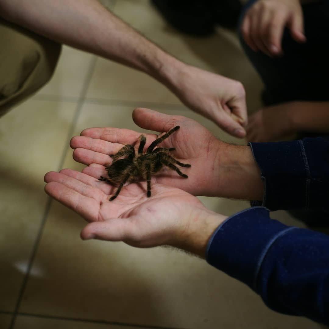 В Кирове пройдет выставка пауков