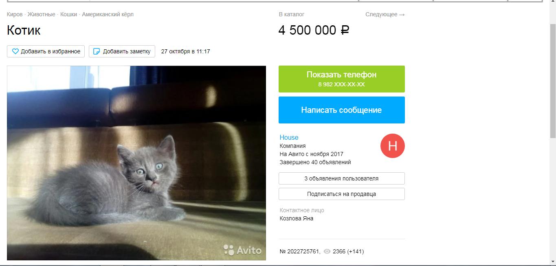 Предприимчивые кировчане продают обычного котенка за 4,5 миллиона рублей