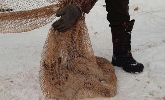 В Богородском местные жители поймали заблудившуюся рысь