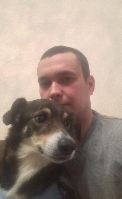 Чуда не произошло: пес, съевший мясо с иголками умер спустя две недели