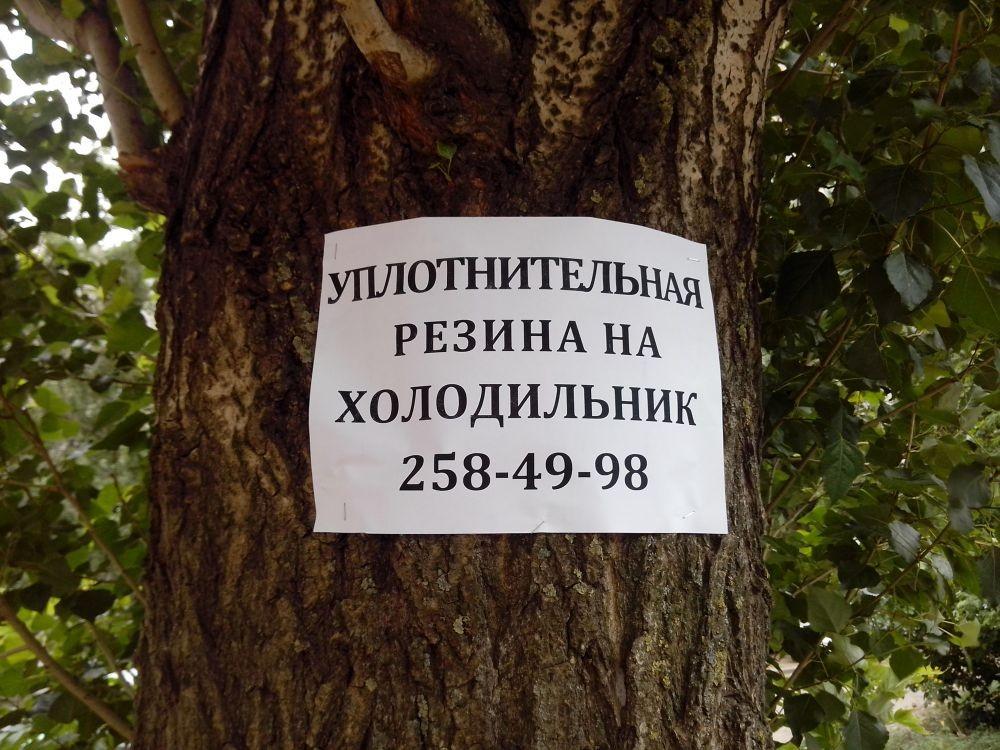 Реклама на деревьях может обойтись кировчанам в кругленькую сумму