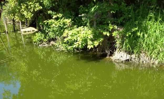 Экологи проверят реку Чахловицу