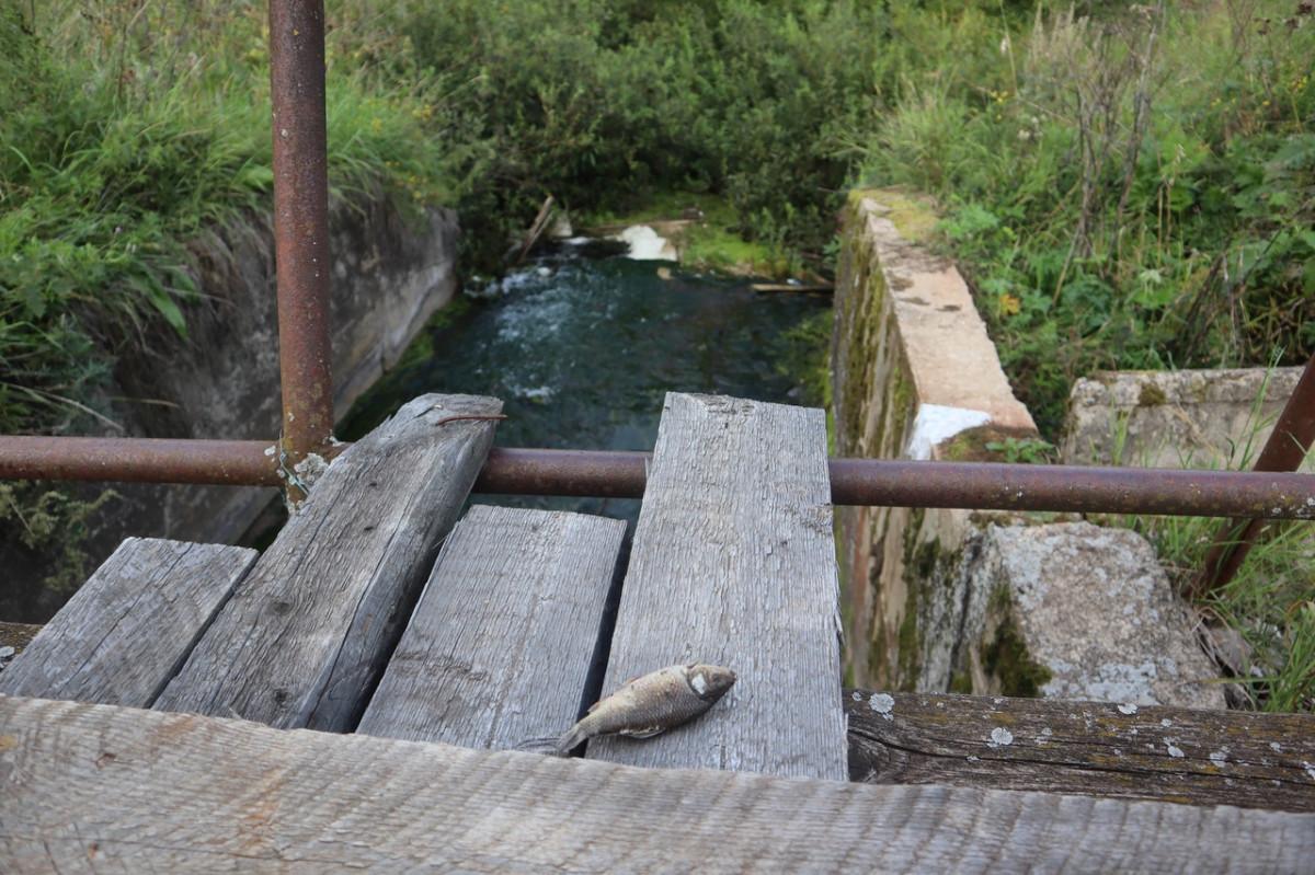 В Мостовице действительно была щелочь