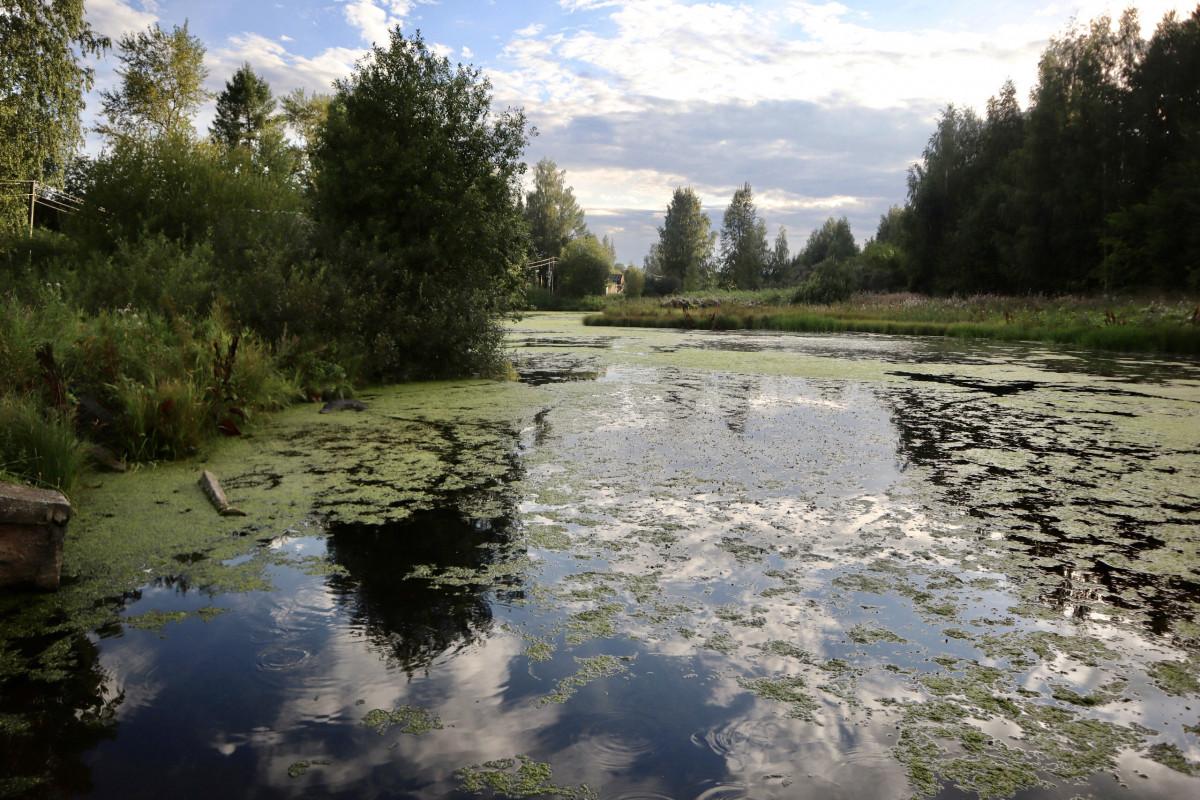 Причиной гибели рыбы в реке Мостовица могла стать щелочь