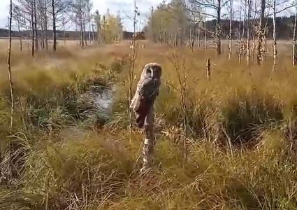 Странное поведение совы привлекло жителей Верхнекамского района