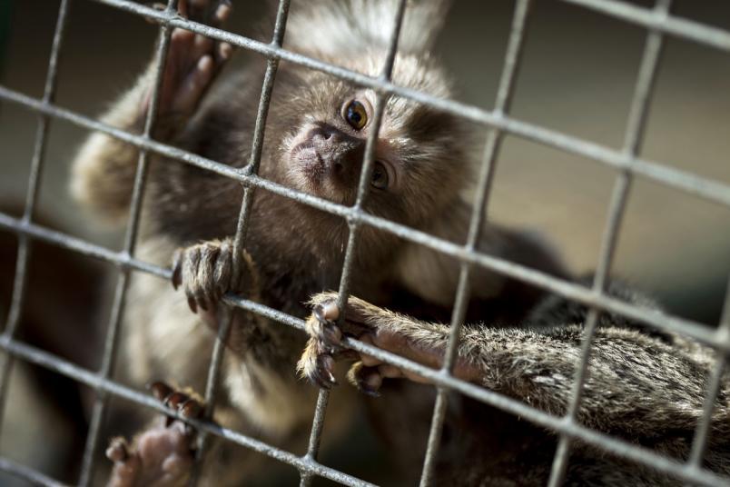 В работе кировской выставки-зоопарка обнаружили ряд нарушений